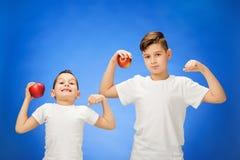 Rapazes pequenos consideráveis com as duas maçãs vermelhas Retrato do estúdio sobre o fundo azul Fotografia de Stock