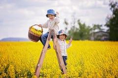 Rapazes pequenos felizes, sentando-se em uma escada de madeira no fie amarelo da violação Imagens de Stock