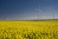 Rape. Landscape yellow rape and blue sky Royalty Free Stock Photography