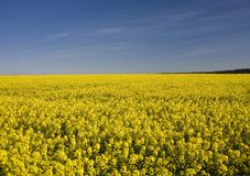 . Landscape yellow and blue sky stock photos