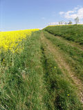 . A path cutting across a lush green field in the country Stock Photo