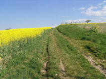. A landscape view of an old, rutted and bumpy pathway over a hillside pasture and countryside Royalty Free Stock Images