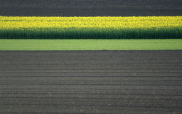 . Pattern of rape, grass and earth stock images