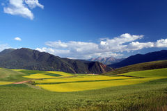 Rape,barley fields and broad  mountains landscape Royalty Free Stock Photo