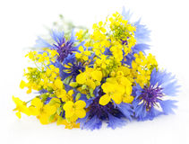 Rape blossoms and cornflowers Stock Photography