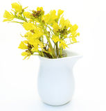 Rape blossoms in the milk pitcher Royalty Free Stock Image
