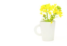 Rape blossoms in a mug Stock Image