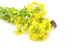 Rape blossoms Royalty Free Stock Images