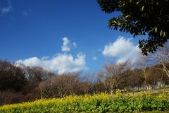 Blossoms. Season has come stock photo