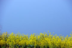 Rape blossoms on the riverside/Japanese landscape in March Stock Photo