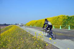 Rape blossoms on the riverside/Japanese landscape in March Royalty Free Stock Images