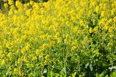 Blossoms. Season has come royalty free stock image