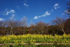 Blossoms. Season has come royalty free stock photo