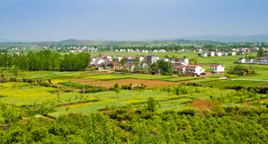Rape farmland sunny shanxi china Royalty Free Stock Image