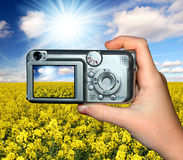 Rape field. Photographer photographing beautiful spring landscape Stock Photography