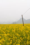 Rape Field. In early spring Stock Images