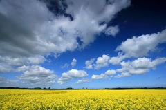 Field. And deep blue sky Royalty Free Stock Photos