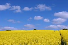 Field. A seed field in Essex stock photo