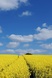 Field. A seed field in Essex, England royalty free stock image