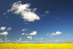 Field. With deep blue sky Royalty Free Stock Photo