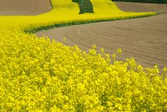 Rape field. In blossom- South Germany Royalty Free Stock Photos