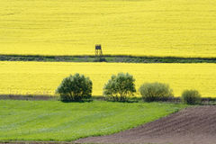 Rape field. A rape field with look-out tower Royalty Free Stock Photo