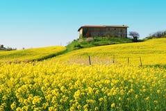 Rape field. A beautiful rape field in the Piemonte region (Italy Royalty Free Stock Photography