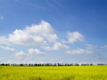Field. Spring field of the in Ukraine Royalty Free Stock Photos