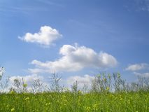Rape field Royalty Free Stock Images