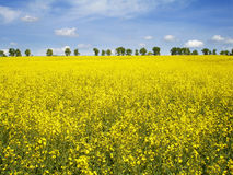 Field. Spring field of the in Ukraine royalty free stock photography