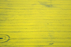 Rape Field. Aerial photo of rape fields in Brandenburg county, Germany, middle of May Stock Images