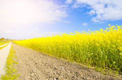 field along country road Stock Photography
