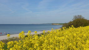 Rape field on the Baltic Sea coast in spring Royalty Free Stock Photos