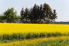 Field and blossom in spring. At south german blue sky sunny day royalty free stock photos