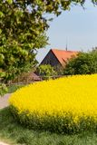 Field and blossom in spring. At south german blue sky sunny day royalty free stock photo