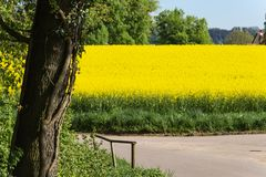 Field and blossom in spring. At south german blue sky sunny day royalty free stock images