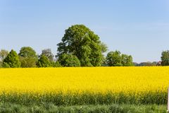 Field and blossom in spring. At south german blue sky sunny day stock photos