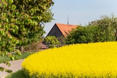 Field and blossom in spring. At south german blue sky sunny day stock photo