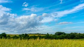 Rape field and blue sky with clouds moving. stock video