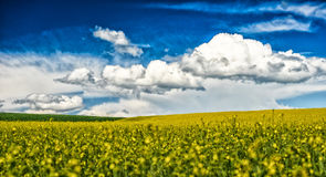 Rape field and blue sky with clouds Stock Photo