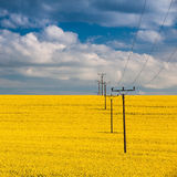 Rape field and blue sky Royalty Free Stock Photography