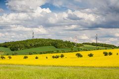 Rape field and blue sky Stock Photography