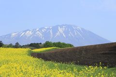 Rape field, canola crops  and Mt.Iwate Royalty Free Stock Image