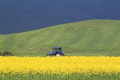 Rape field, canola crops and  tractor Stock Image