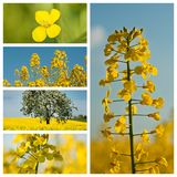 Field collage. Collection of field collage royalty free stock images