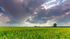 Rape field and dramatic sky, time-lapse. Rape field and dramatic sky, time- lapse stock footage