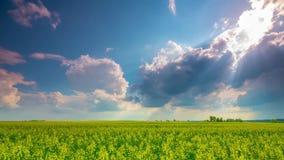 Rape field and dramatic sky, time-lapse. Rape field and dramatic sky, time - lapse stock video footage