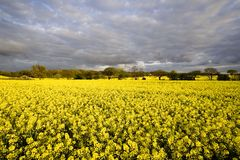 Field in England royalty free stock image