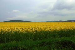 Field. Folled with yellow color royalty free stock image