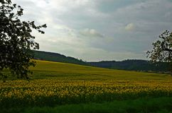 Field. Folled with yellow color stock image